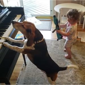 Piano Dog 300 X 300
