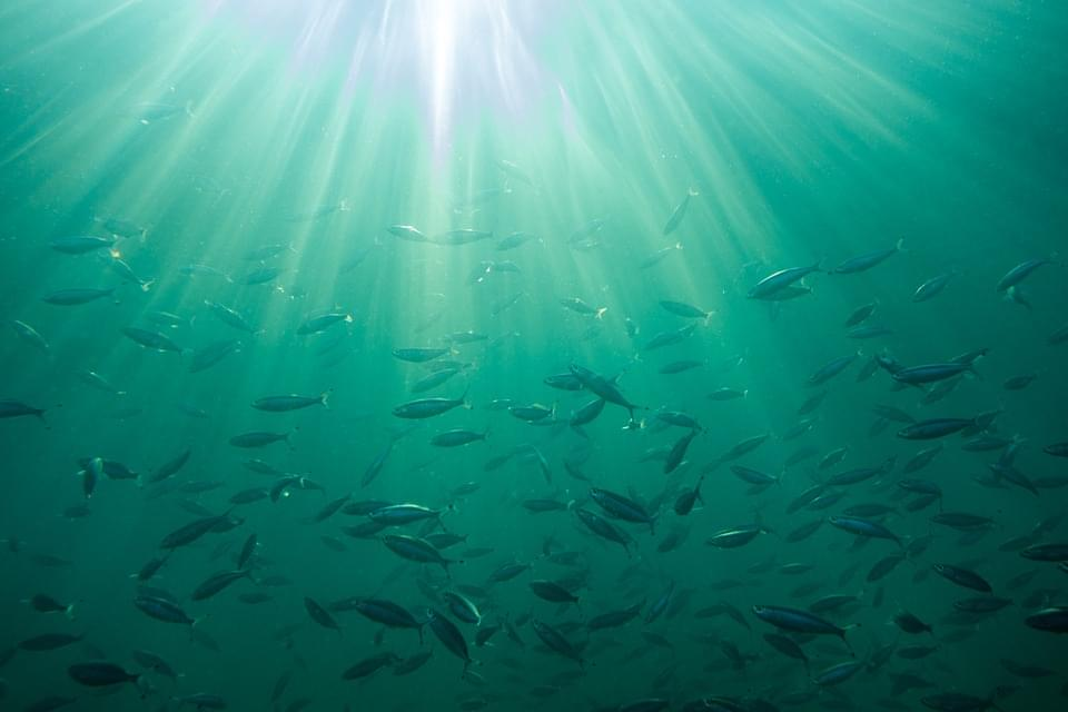Commission adopts changes to fisheries regulations, orders