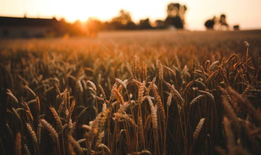 Husker Harvest Days Cancelled