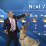 When Weather Goes To The Dogs