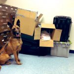 NSP Seizes Over 100 Lbs Of Drugs After Attempting To Assist Motorist