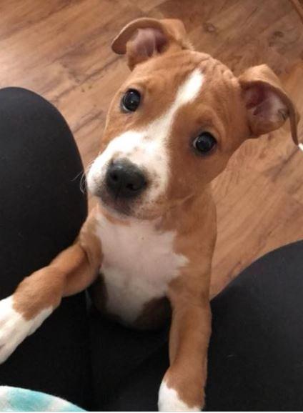 puppy-stolen
