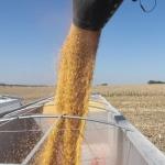 Farm Bankruptcies Rise, Ag Problems Plague Nebraska's Farmers