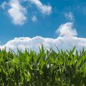 Nebraska Sues Ethanol Plant In Mead For Violating Environmental Standards