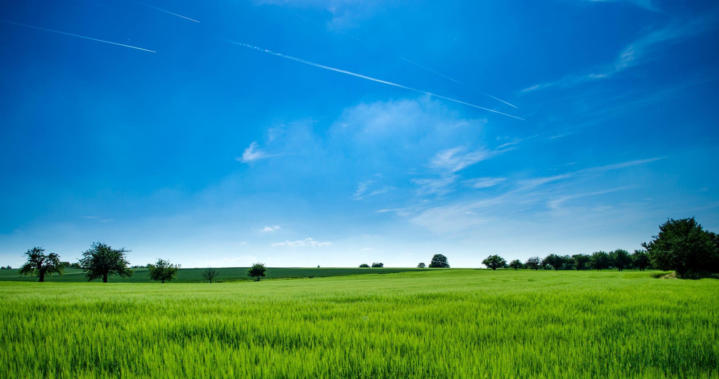Effort Underway To Allow Nebraska Farmers To Grow Hemp