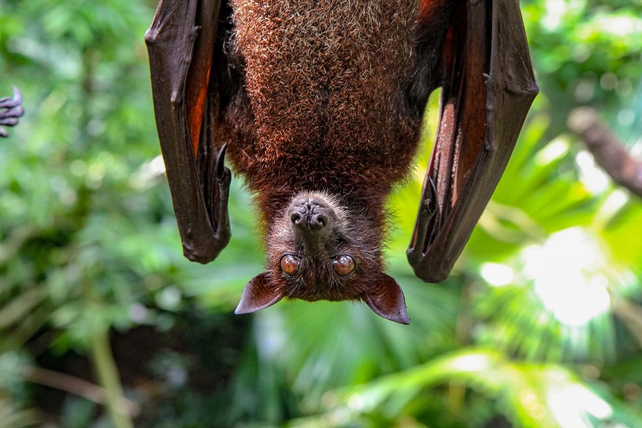 A Dozen Bats Test Positive For Rabies In Nebraska; Residents Encouraged To Protect Homes