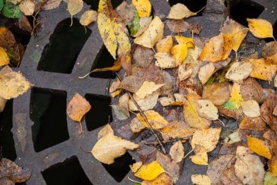 Drainage sewer manhole in the autumnal park covered with yellow leaves