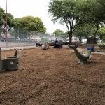 Another cleanup scheduled for Thornton Park