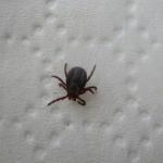 Health Dept. warns against ticks