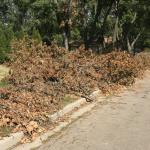 Derecho damage cleanup continues in Ottawa