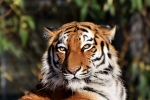 Rob Lowe As TIGER KING?