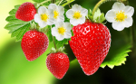 Not berry apetizing.