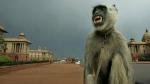 Monkeys Steal Virus Samples From Lab