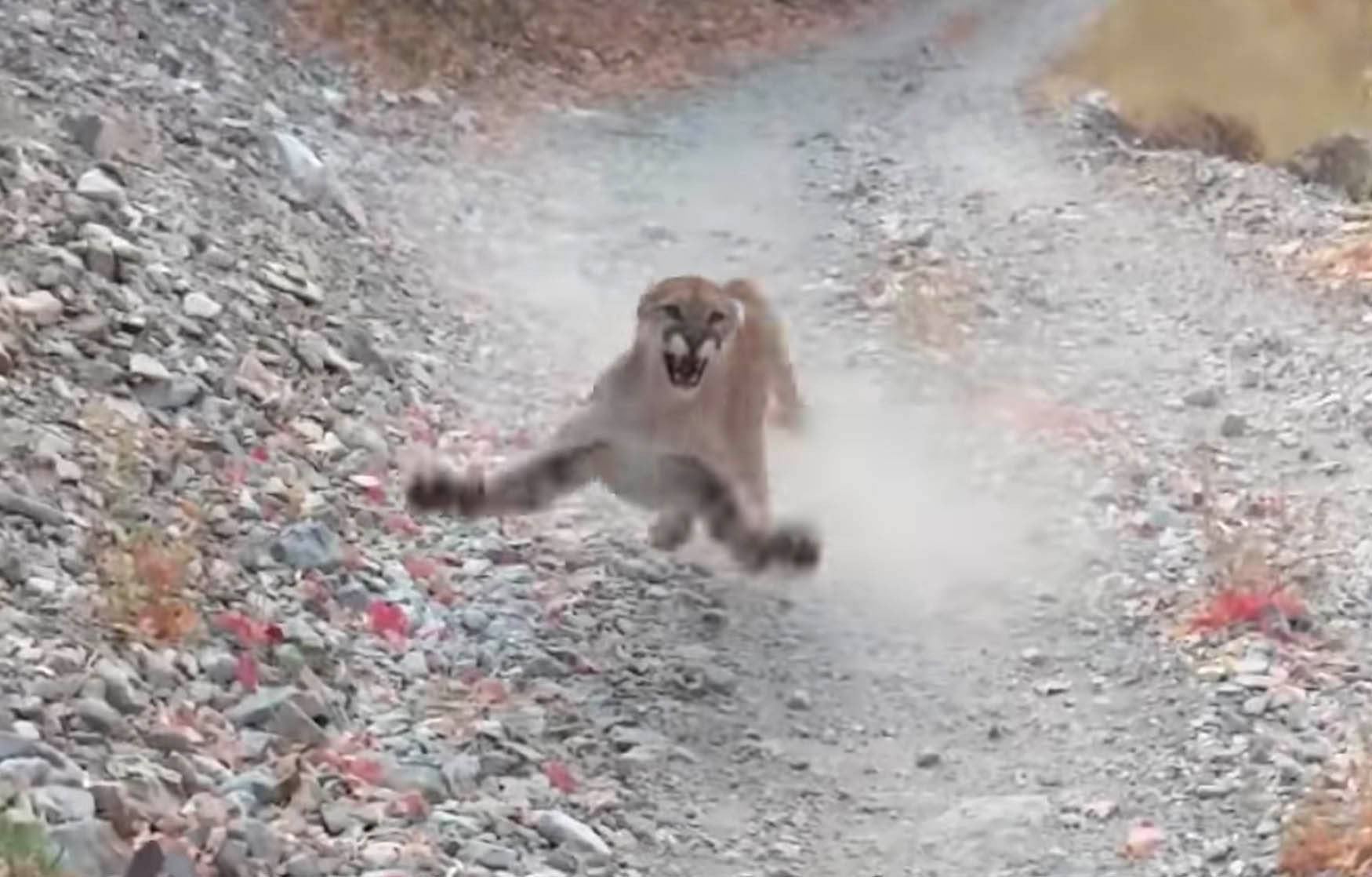 Additional Cougar Stalking Video – Enter blog to watch