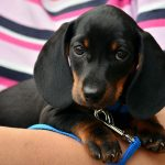 Love Puppies? Get Paid To Look At Puppy Photos