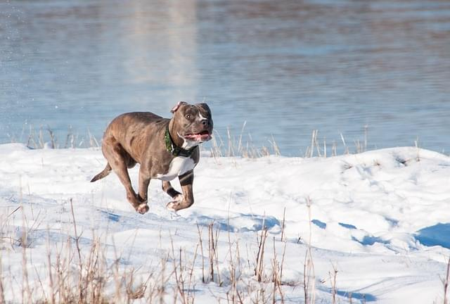 A Study Reveals What Dog Breeds Are The Most Aggressive