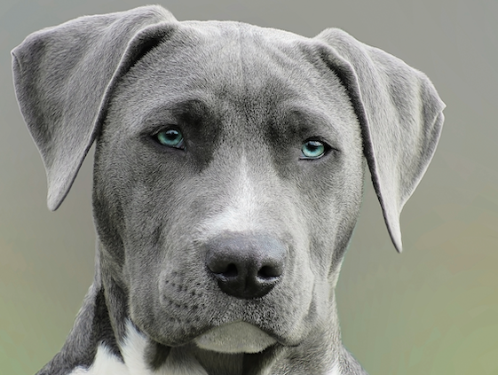 Dogs Go Through A Teenager Phase: Study Says