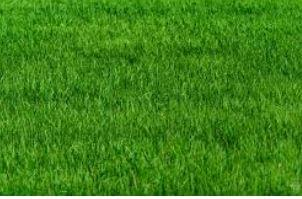 Grassland generic