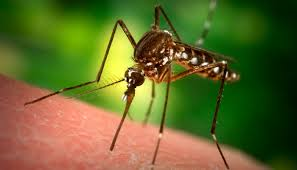 Warmer Temps and Plenty of Standing Water Making Things Perfect for Mosquitoes