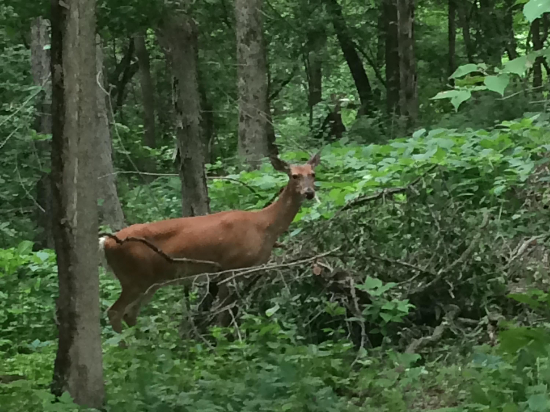 Deer Taken in First Firearm Weekend Dramatically Lower Than Last Year