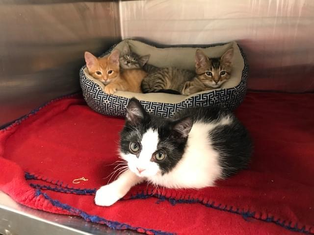 Kittens 8-20-19