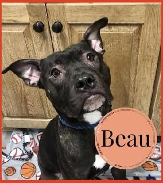 Meet Beau – Hodag Country Critter for 11-26-19