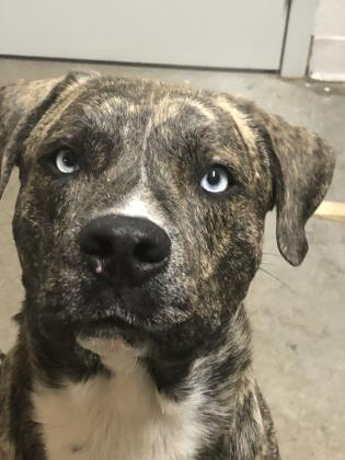 Meet Sinatra – Hodag Country Critter for 1-7-2020