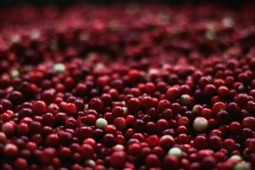 berries-close-up-cranberries-139917 (2)