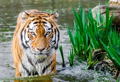 'Tiger King' Receives Six Emmy Nominations