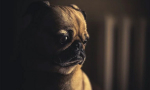 There's a New Dating Site For Lonely Pets