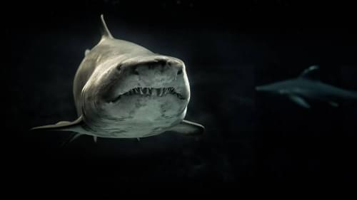 Mike Tyson to Battle Great White Shark for 'Shark Week'