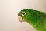 Parrot Sings Beyoncé's 'If I Were A Boy'