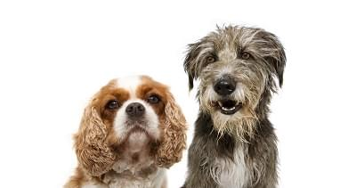 "The stars of Lady and the Tramp pontificate ""Are we real dogs or CGI dogs?"" Confucius say hmmm..."