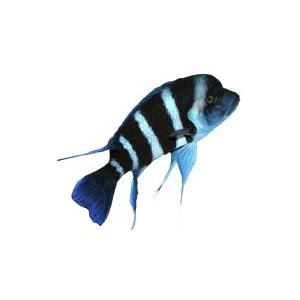 FishFreaks300x300
