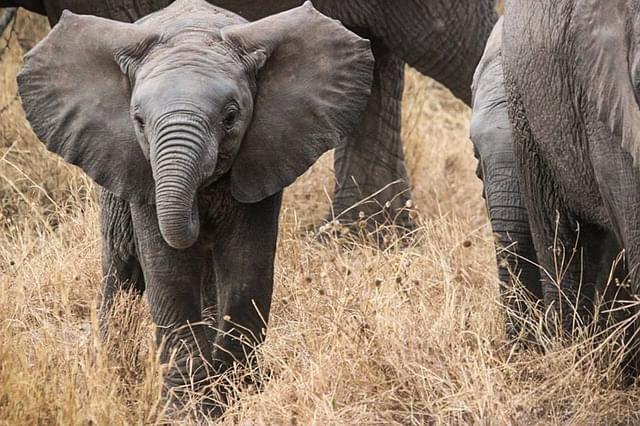 elephants-285515_640