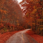 The Best Autumn Drives in WI!