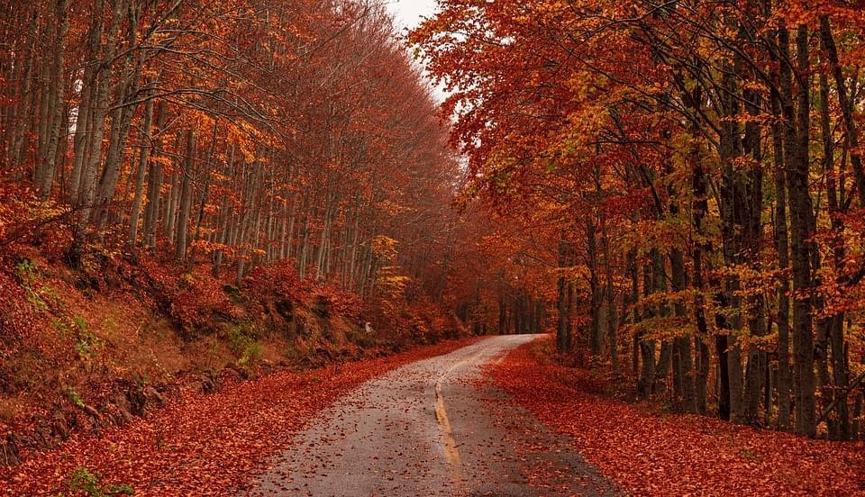 fall-4457091_960_720