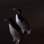 The Social Distancing Doesn't Apply To Penguins