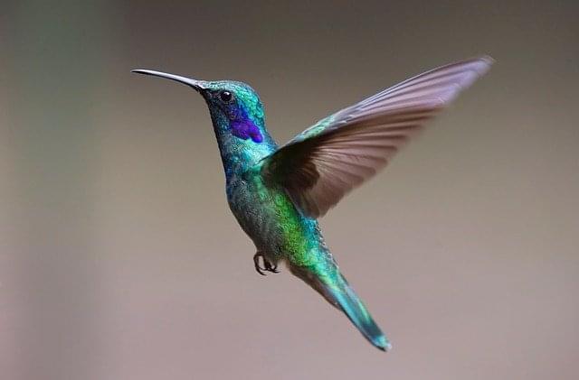 hummingbird-2139279_6401