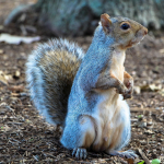 Squirrels And Onions Can Tell Us If We Will Have A Bad Winter