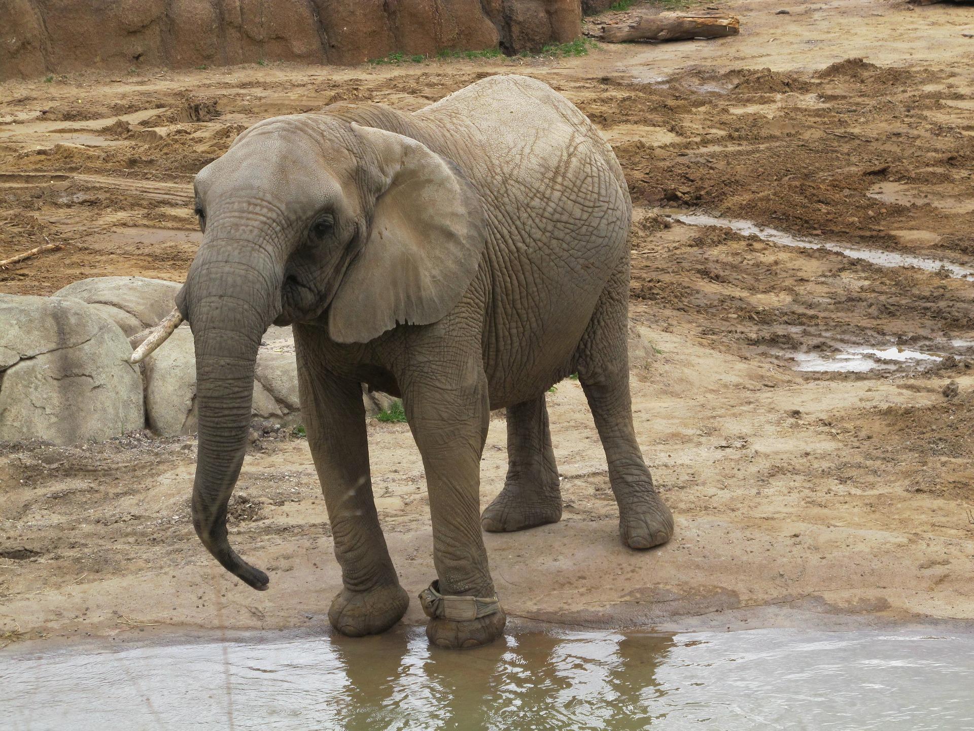 elephant-2760403_1920