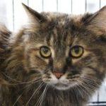 Rock 108 Fursday: Halsey the Cat!