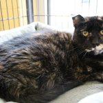 Rock 108 Fursday: Jelly the Cat