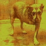 24 Years Ago, Alice In Chains Released Their Last Album with Layne Staley