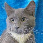 Rock 108 Fursday: Ebenezer the Cat!