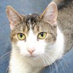 Rock 108 Fursday; Skyla the Cat!