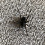 I Saw This Big Ass Spider Today – Wonder What Kind It Is. . .