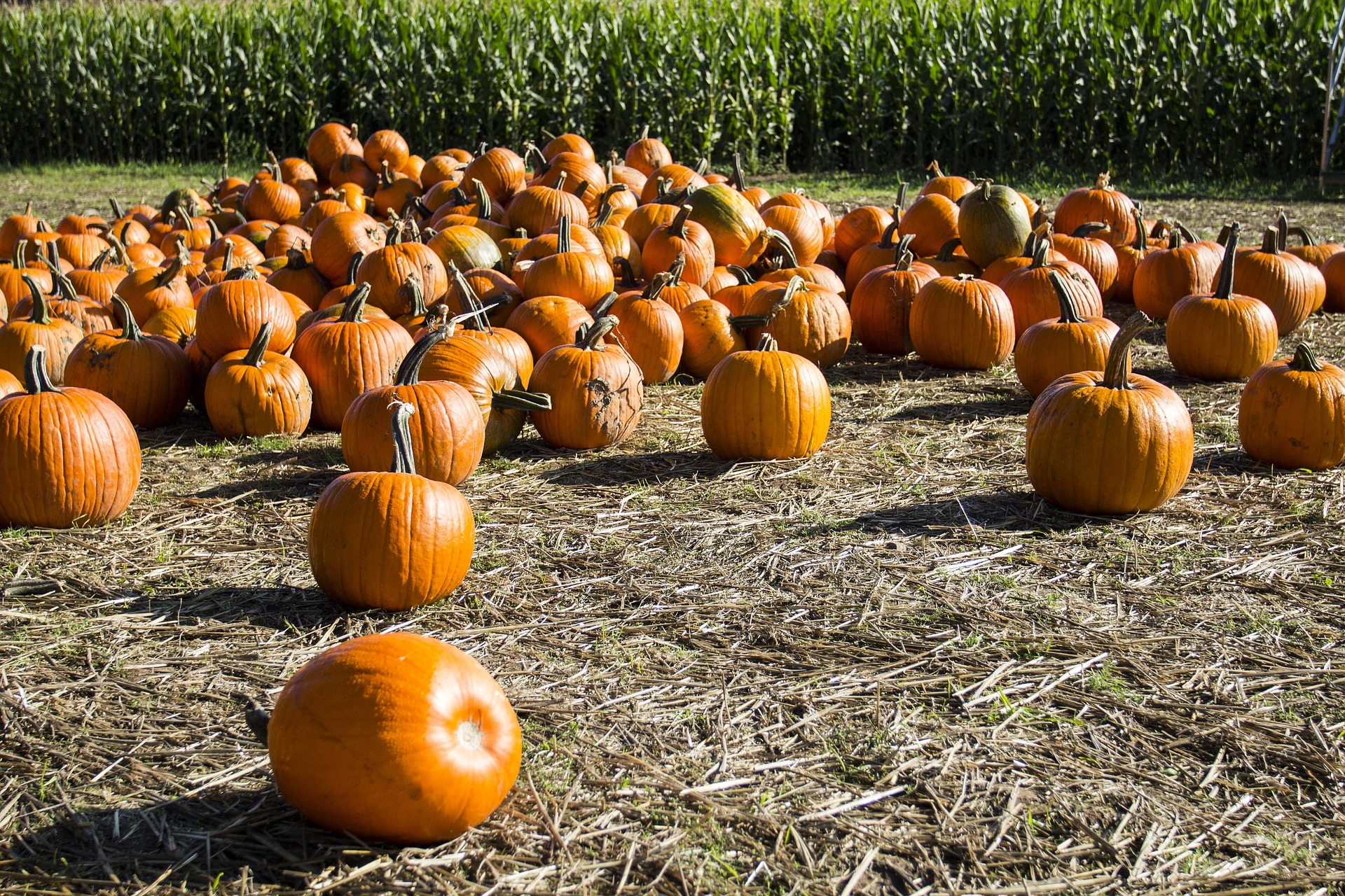 pumpkin-patch-3731150_1920