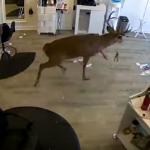 A Deer Crashes Through Hair Salon Window
