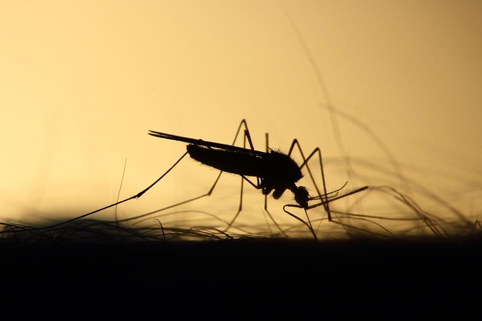mosquito-3860900_960_720